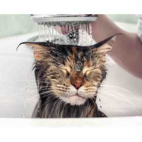Shampoing chat antibactérien