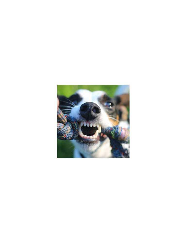 Hygiène bucco dentaire chien plaque destructor
