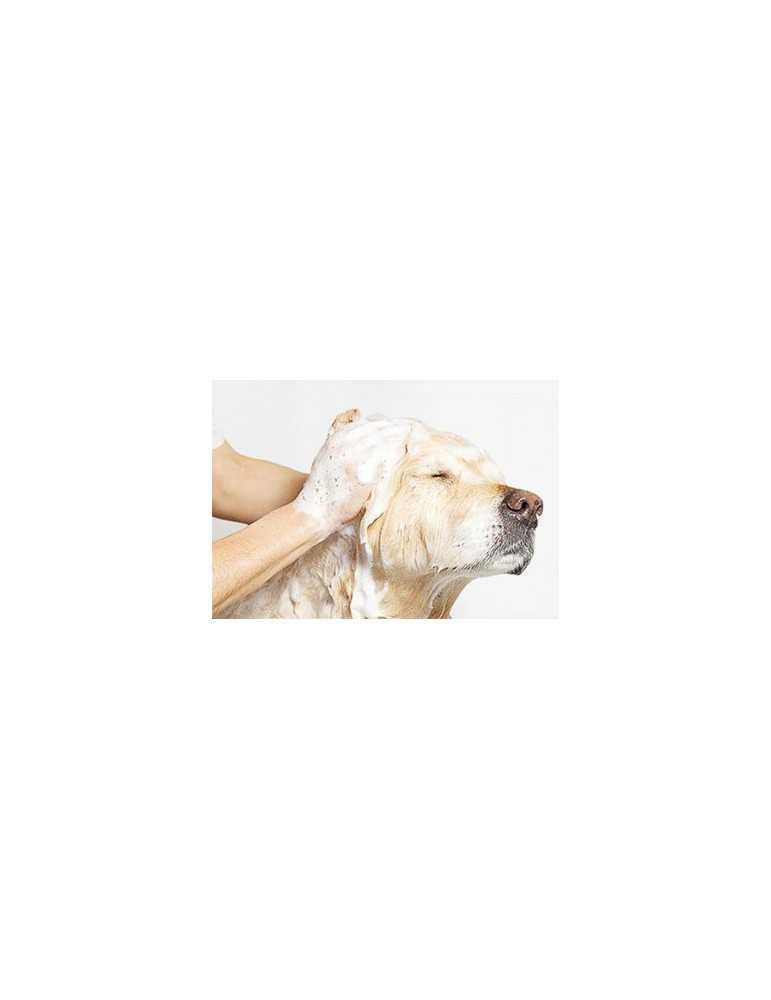 Shampoing pour chien et chat bubimex