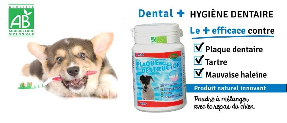 Plaque destructor dental plus bubimex pour chien