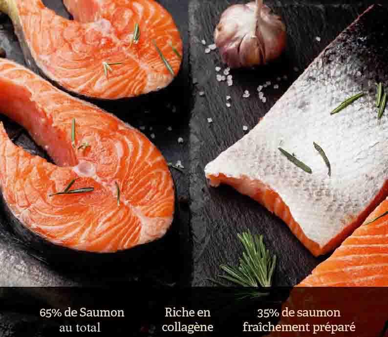saumon frais croquette superfood croq-nutrition