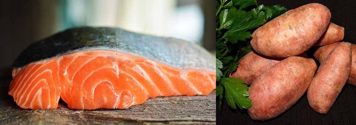 croquettes chiot saumon patate douce légumes